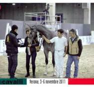 Ben Ryé dei Folletti (S. I. femmina grigia 2010)