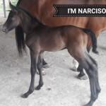 im-narciso